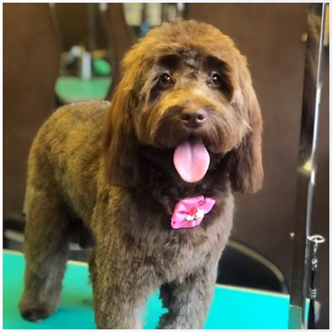 Dog Grooming Stockport